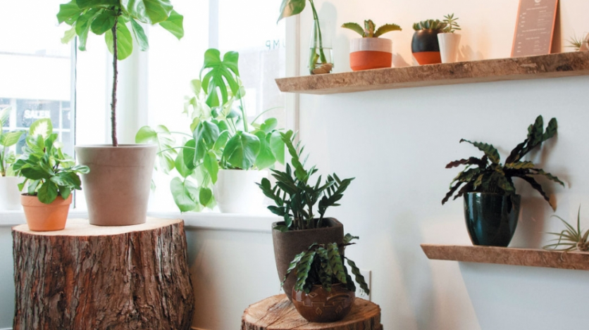 stump: a reinvention of house plants