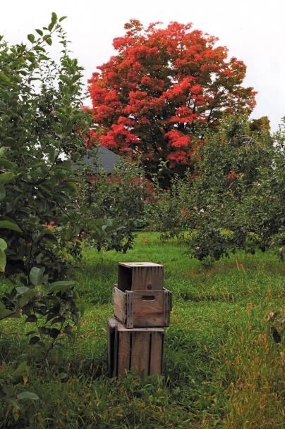 bright red fall tree