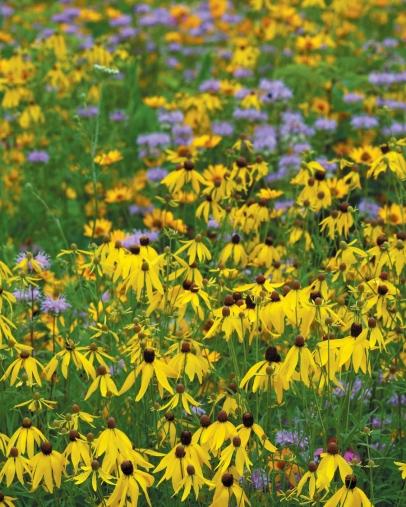 A prairie pollinator garden at DNR headquarters in Columbus