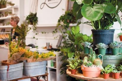 Luna Gifts & Botanicals.