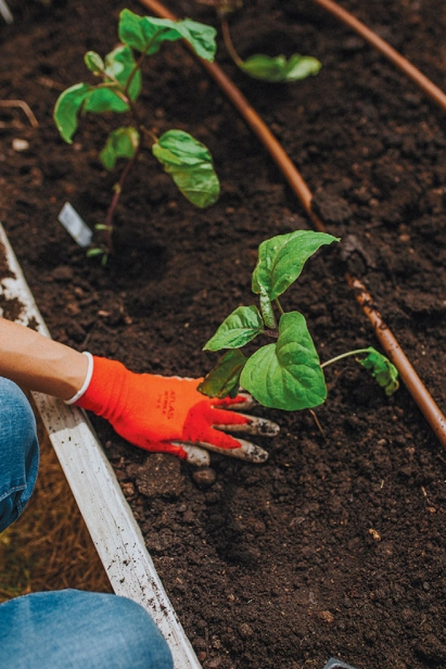 planting in the community garden