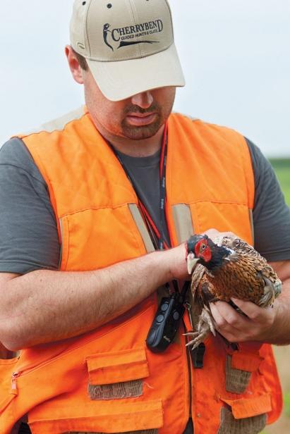 Steve Berk releasing quail and pheasant for hunt