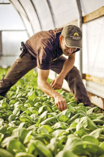 gardener tending plants inside greenhouse