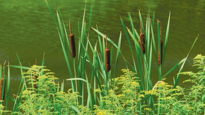 edible plants and weeds that are in season this spring in Columbus, Ohio